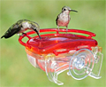 Gem Hummingbird Feeder