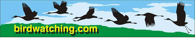 Birdwatching Dot Com Masthead