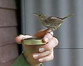 House Wren and Diane