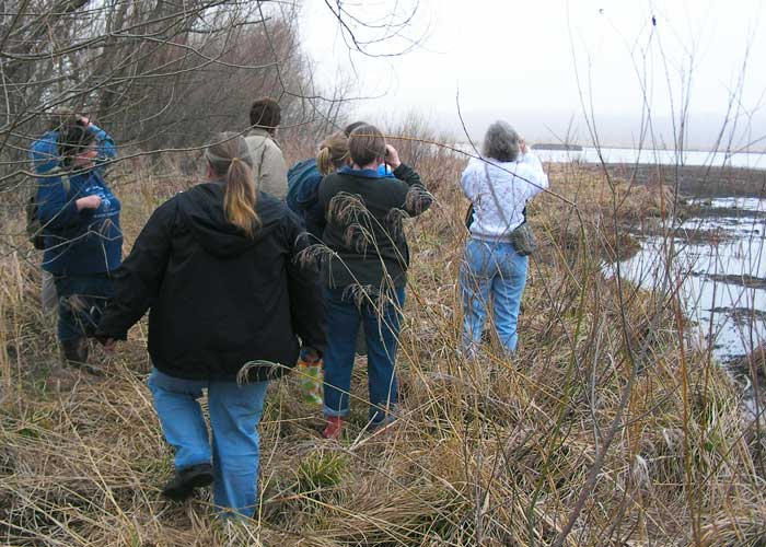 Birders Hike into the Wetland