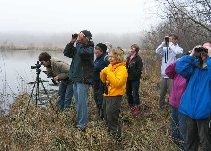 Birders Enjoying Pelicans