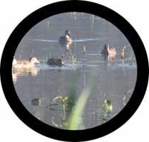 [Image: binocular_view.jpg]