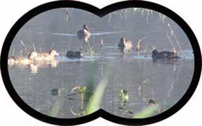 [Image: binocular_view_movies.jpg]
