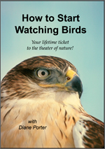 How to Start Watching Birds